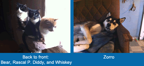 Bear, Rascal P. Diddy, Whiskey and Zorro